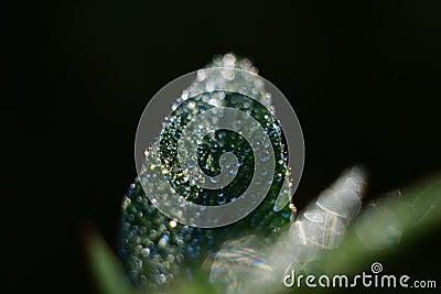 Dew Drops On Green Leaf Free Public Domain Cc0 Image