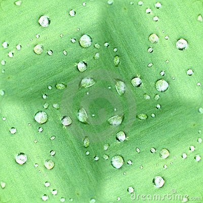 Dew Drops On Green Leaf Pattern