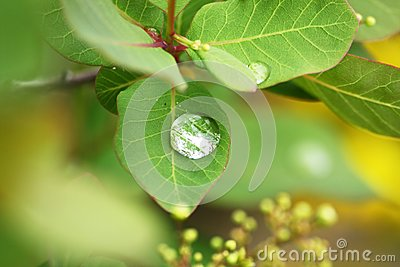 Dew drops on a leaves