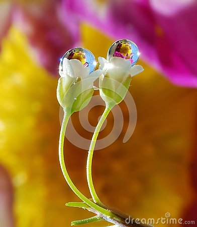 Free Dew Drops On A Flowers Royalty Free Stock Photo - 114065385