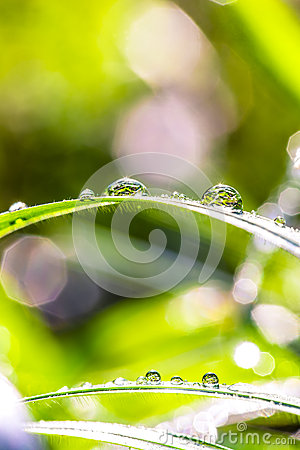 Dew drops in sunshine