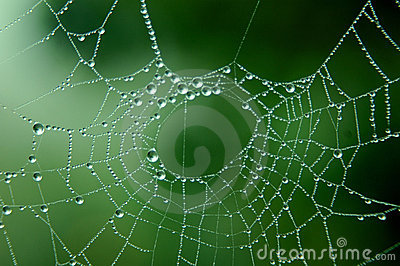 Dew Drops on Web