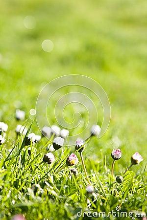 The dew in fresh grass