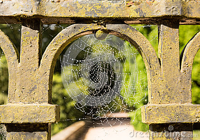 Dew glistening cobweb on gate