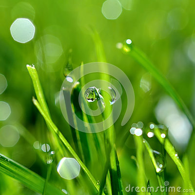 Dew and grass