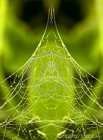 Free Dew On A Spider Web Stock Images - 12146464