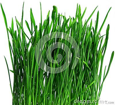 Dew on spring grass