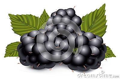Dewberries (blackberries) and green leave