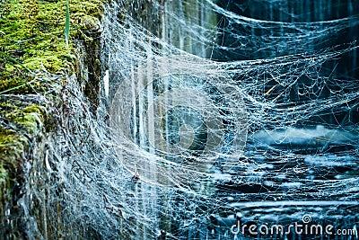 Dewdrop in spider web