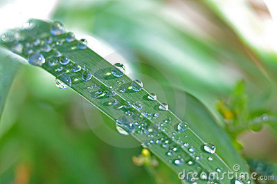 Dewdrops on a leaf