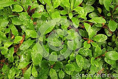 Dewy forest floor