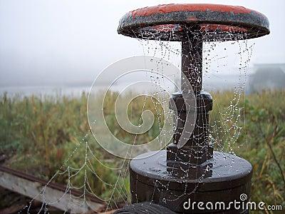 Dewy Spiderweb