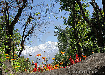 Dharamsala himalayas and orange flowers blooms