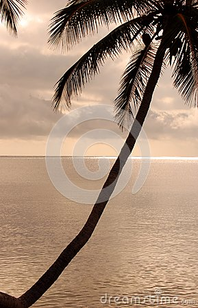 Diagonal Palm Tree