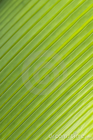 Diagonal pattern of palm leaf