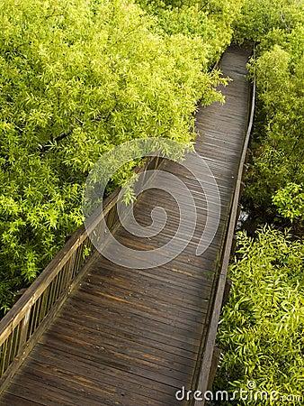 Diagonal wooden pathway