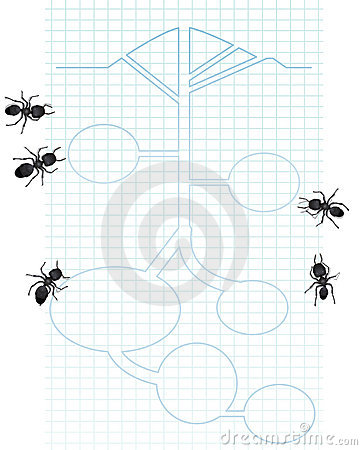 Diagram of ants