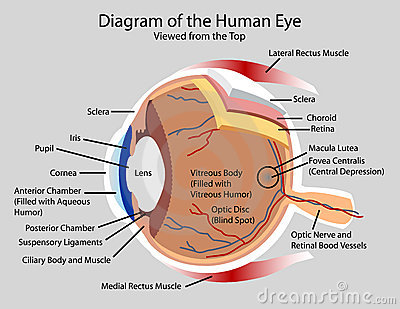 diagram of the human eye images the eye allaboutvisioncom diagram diagram of the human eye royalty stock images image 17994559