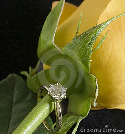 Diamond ring on rose stem