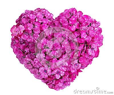 Dianthus Heart