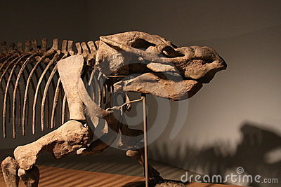 Dicynodont Editorial Stock Photo