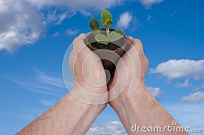 Die Anlage, pflanzend, der Garten, im Garten arbeitend wachsen wachsend