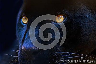 Die Augen eines Fleischfressers