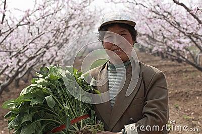 Die Landarbeiter von China.