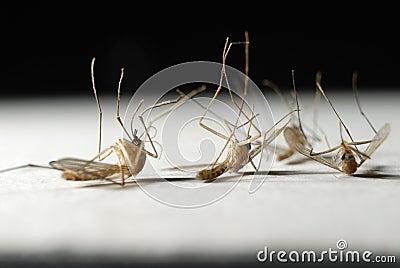 Die mosquitoes