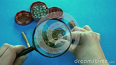 Die Person, die medizinische Marihuanaknospen mit Lupe betrachtet Schleifer- und Marihuanagelenk sind auf dem Hintergrund stock video