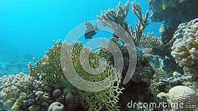 Die Schönheit der Unterwasserwelt stock footage