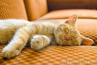Die Schlafenkatze