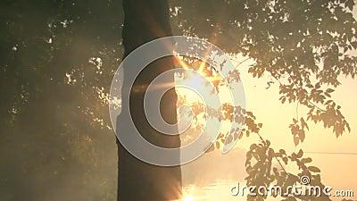 Die Strahlen der Sonne kreuzen den Baum und glänzen durch das Laub gegen den Hintergrund des Flusses stock video