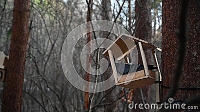 Die Taube steht auf einer kreativen Vogelzufuhr, die an einem Baumstamm gebunden wird Taubenaugen Früher kalter Frühling Baumrind stock footage