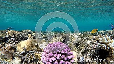 Die Tiefe des Ozeans Coral Reef stock video footage
