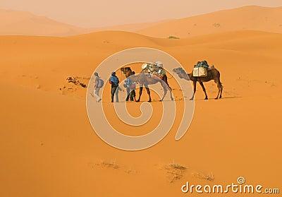 In die Wüste
