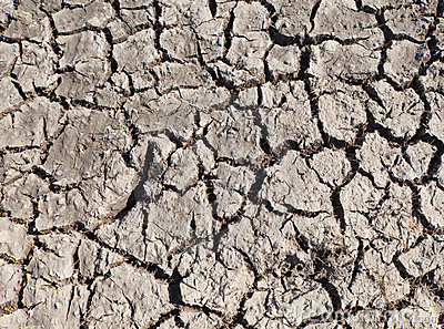 Died and cracked soil