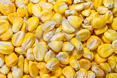 Died Organic Corn beans background
