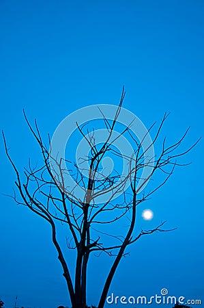 Died tree