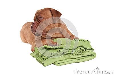 Dieses ist meine Decke