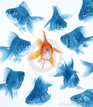 Free Difference By Goldfish Stock Photo - 8091690