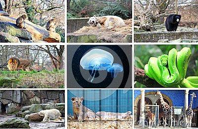 Different animals at the Berlin Zoo