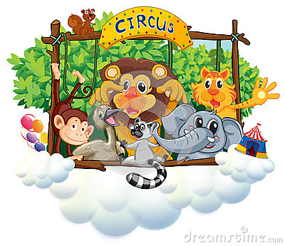 Different animals at the circus