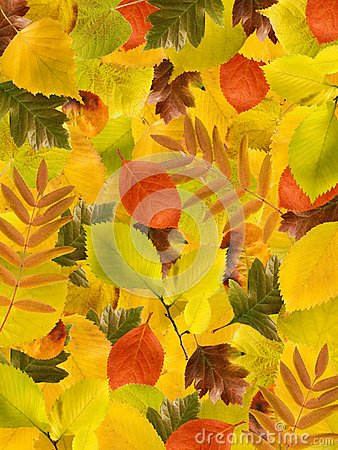 Different autumn leaves background