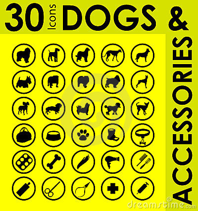 Different breeds of dogs accessories
