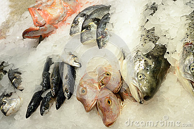 Different fresh seafood on ice