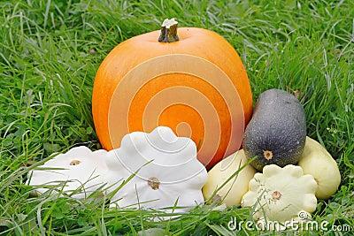 Different gourd family vegetables