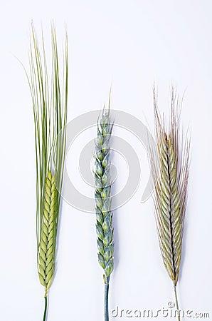 Different grain