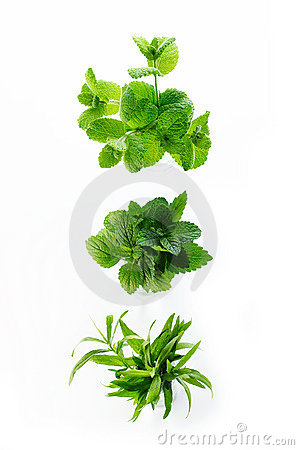 Free Different Herbs Royalty Free Stock Photos - 11487658