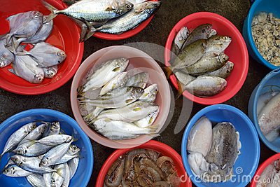 Different kind of fish selling in market